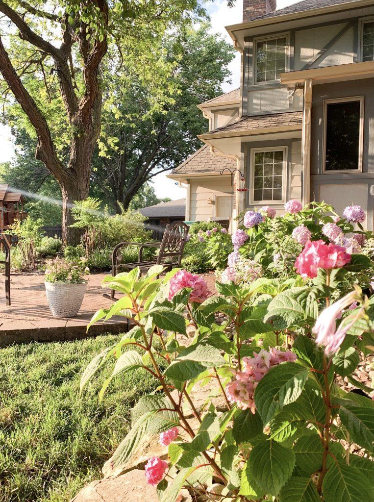 Hydrangeas, landscaping & back of a tudor home